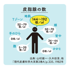 体の皮脂量を記載した図